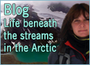 """""""Life beneath the streams in the Arctic"""""""